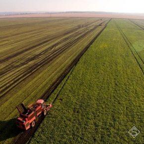 С полей вывезено более миллиона тонн сахарной свеклы
