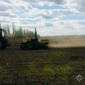 На Сумщине дожди поспособствовали посевной озимой пшеницы