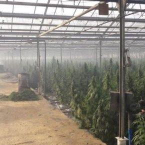 СБУ разоблачила подпольную теплицу по промышленному выращиванию марихуаны стоимостью 50 млн евро
