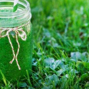 В Украине в промышленных масштабах выращивают микроводоросль спирулину