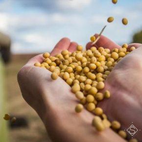 Аграриям планируют вернуть возмещение НДС за экспорт сои и рапса