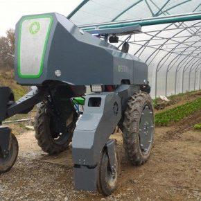 Для ухода за виноградником сконструировали специального агроробота