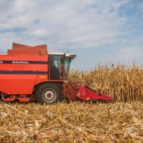Темпы уборки кукурузы в США значительно отстают от прошлогодних — USDA