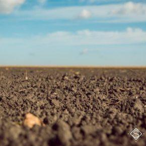 В Держгеокадастрі озвучили размер годовой платы за аренду 1 га земель