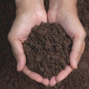 Аграриям рассказали, как сформировать систему подкормка для озимых культур