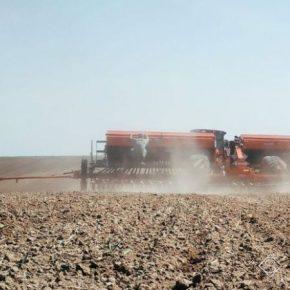 Темпы сева озимых зерновых отстают от прошлогодних на четверть