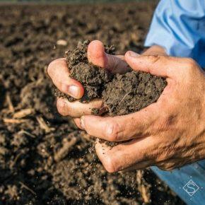 Аграрии Луганщины работают над сохранением и улучшением плодородия почв