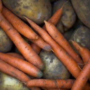 Опасный вредитель угрожает урожаям моркови и картофеля в ЕС