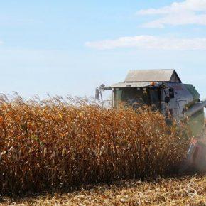 На Днепропетровщине начали собирать кукурузу и подсолнечник