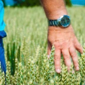 Специалисты по защите растений пользуются высоким спросом на рынке труда АПК
