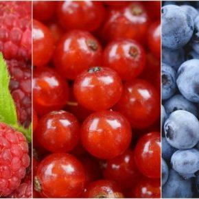 На Черниговщине переориентироваться с выращивания картофеля на фрукты и ягоды
