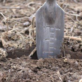 На подвижность цинка негативно влияют высокие дозы фосфорных и азотных удобрений