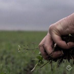 Почвы в Украине деградируют из-за неправильного использования арендованной земли — Радченко