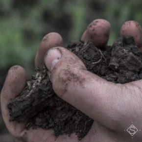 Со следующего года в Украине будет запущена система мониторинга состояния почв