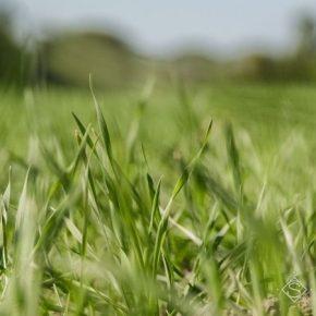Недавние осадки улучшить состояние посевов озимых в Украине