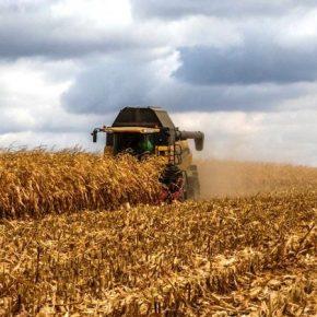 Урожайность кукурузы на Донетчине выросла практически на тонну