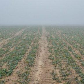 Украинские производители обеспокоены состоянием зерновых через засушливые условия