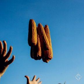 За неделю в Украине подорожали зерновые культуры