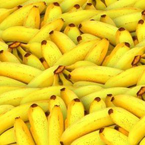 Новая болезнь угрожает урожаям бананов в мире
