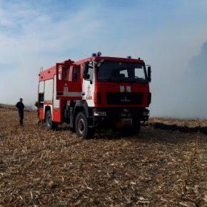 На Черкасщине горят кукурузные поля
