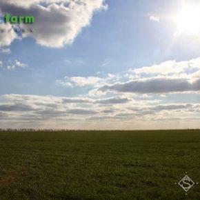 На выходные в Украине прогнозируют сухую и солнечную погоду