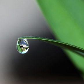В Украине растет спрос на биопрепараты для защиты растений