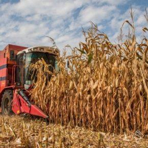 С полей Винницкой области собрано более 3 млн тонн зерна нового урожая