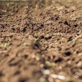 В Украине инициируют референдум о рынке земли