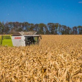 Средняя урожайность кукурузы в Черкасской области достигает 8 т/га