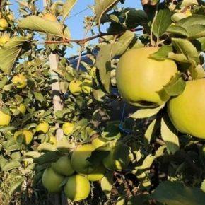 В Запорожье собрали урожай гигантских фруктов