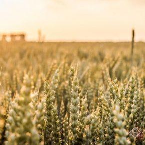 Для украинских аграриев разработают систему страхования урожаев