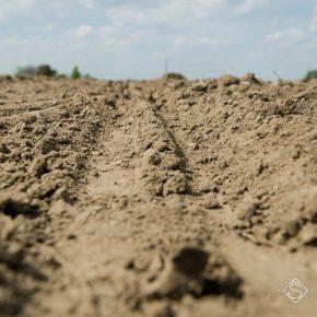 Половина сельхозземель Украины находится в состоянии засухи