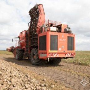 В Сварог Вест Групп отчитываются о высокую урожайность сахарной свеклы