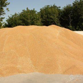 В этом году в Одесской области собрано меньше пшеницы, ячменя и гороха за последние 4 года
