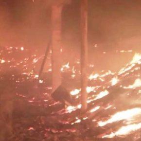 Огонь уничтожил 1,5 тыс. тонн семян подсолнечника в Днепропетровской области