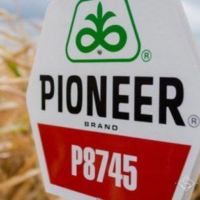 Семена Pioneer будет продаваться в кредит — Corteva