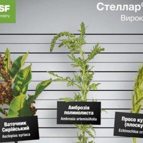 Аграриям презентовали усовершенствованный гербицид Стеллар® Плюс