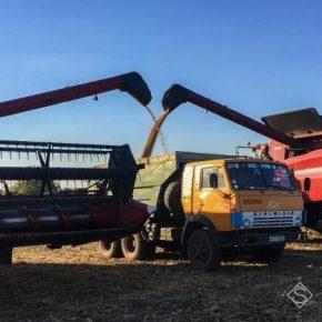 На Львовщине зафиксировано снижение урожайности поздних культур