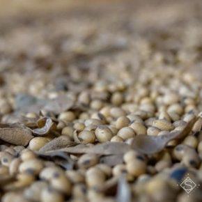 По урожайности риса и сои Херсонщина в лидерах по Украине