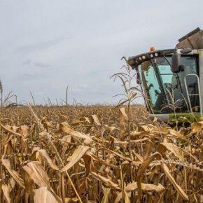 Аграрии Кировоградщины пересекли рубеж в 4 млн тонн зерна нового урожая