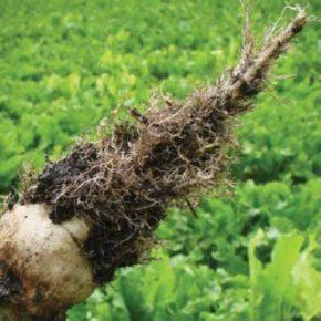 В Винницкой области ликвидирован распространения карантинного организма