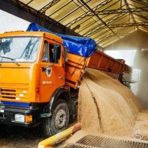 Названы ТОП-5 областей Украины с самыми высокими ценами на зерно