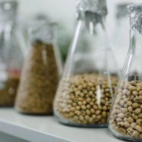Иностранный производитель семена осваивать отечественный рынок
