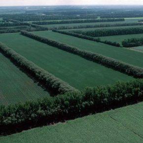Урожайность культур на Херсонщине будут увеличивать за счет лесополос