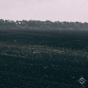 Черкасской области не удастся избежать потерь урожая из-за засухи