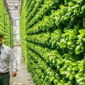 Разработан вертикальную ферму с инновационной системой освещения