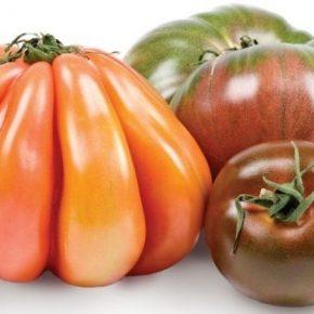 В США презентовали новые сорта разноцветных томатов