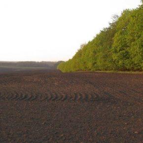 На полях Херсонщины будут восстанавливать лесополосы