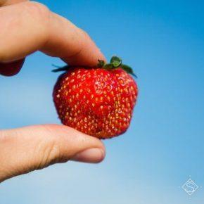 Фермер со Львовщины поделился опытом закладки плантации клубники