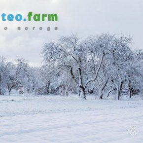 В Украине ожидается похолодание и снег — недельный прогноз погоды